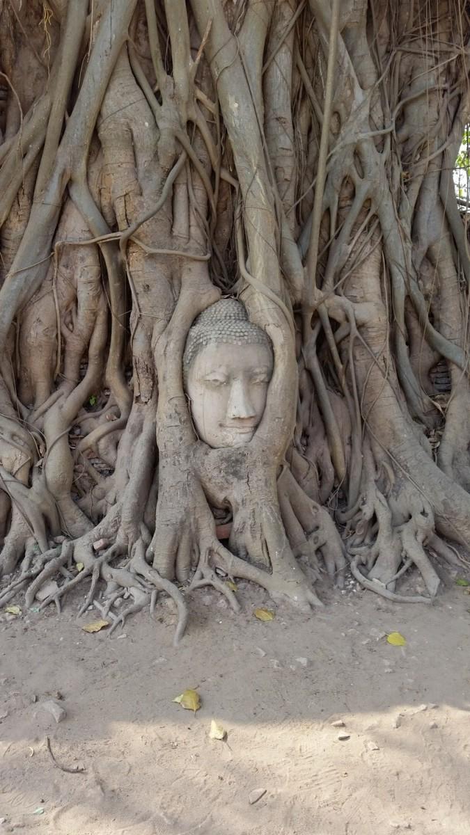 Stage Yoga Thaïlande Ayuthiya